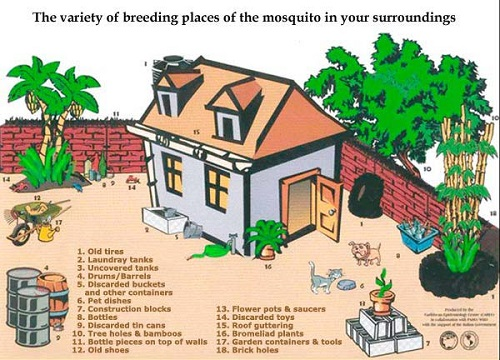 Continue To Take Measures To Eliminate Mosquito Breeding